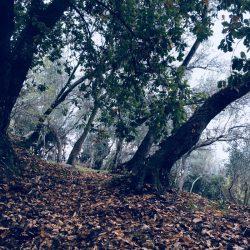 piana di ulivi lungo il sentiero CAI che collega Lerici a La Serra proseguendo per Fiascherino, Tellaro, Montemarcello.