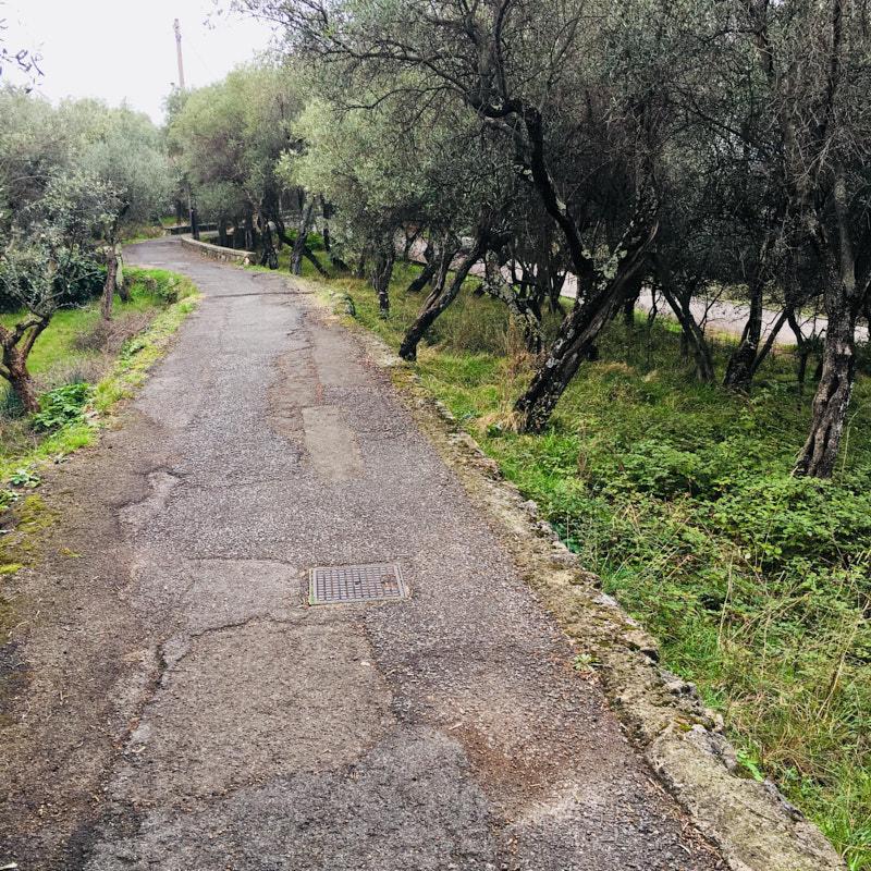 Salita Canata in direzione Lerici immersa negli ulivi. Zona pedonale parzialmente carrozzabile. Location Scouting Italia - duzimage