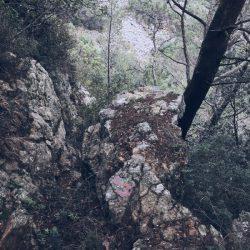 sentiero da Zanego a Tellaro. rocce ricoperte di aghi di pino ligure - location scout Italia - duzimage