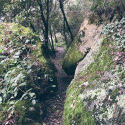 sentiero da Zanego a Tellaro che si snoda tra le rocce ricoperte di muschio - location scout Italia - duzimage