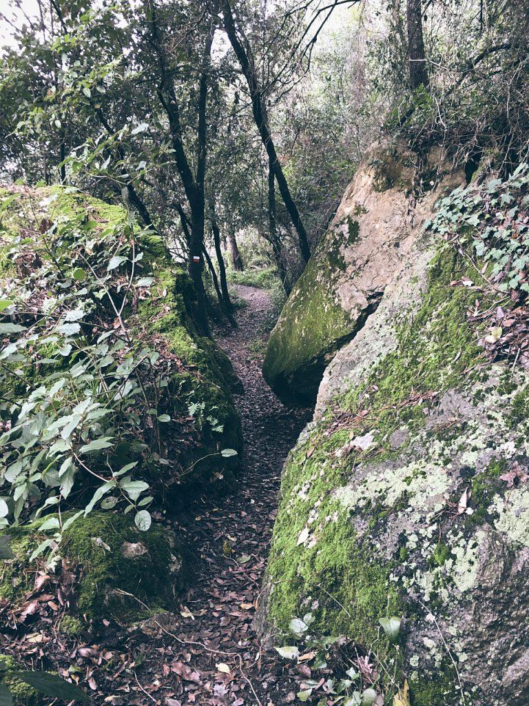 sentiero da Zanego a Tellaro che si snoda tra le rocce ricoperte di muschio