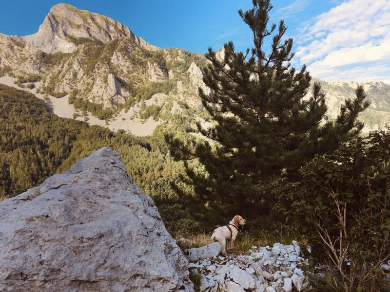 Cane su sentiero in montagna con sfondo parete est del Monte Sagro - Alpi Apuane