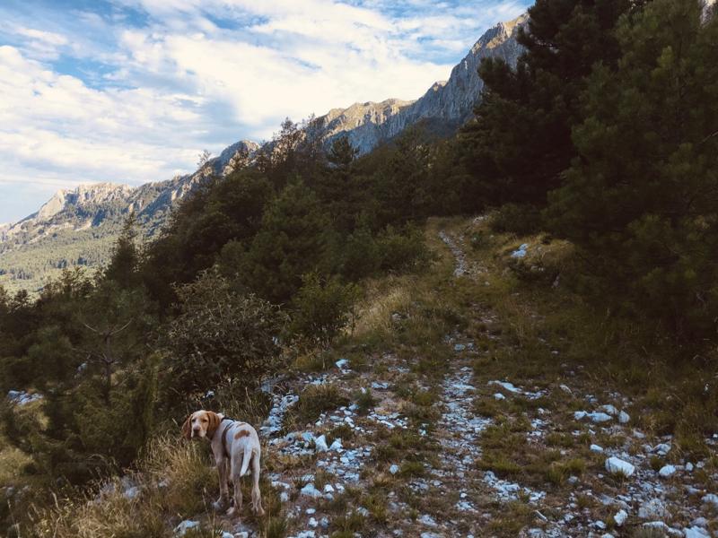Cane su sentiero verso Monte Pizzo d'Uccello, Alpi Apuane